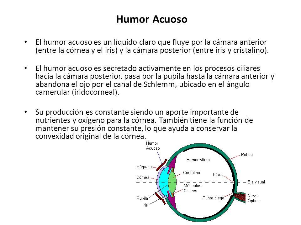 Humor Acuoso