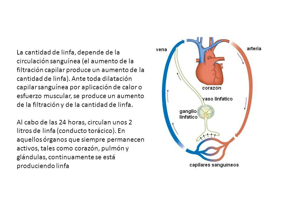 La cantidad de linfa, depende de la circulación sanguínea (el aumento de la filtración capilar produce un aumento de la cantidad de linfa).