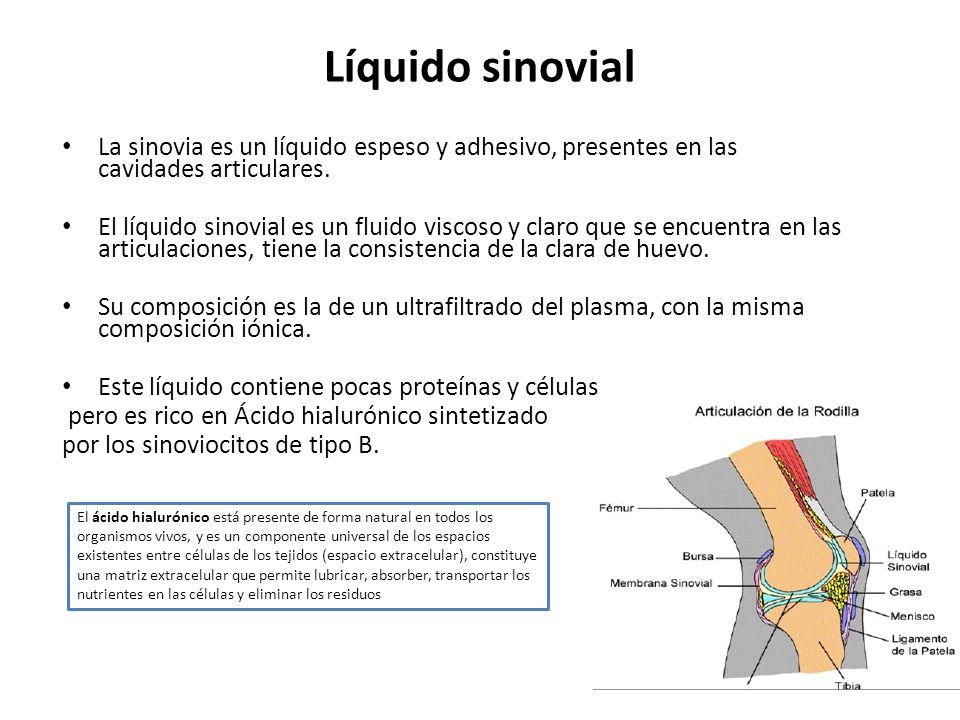 Líquido sinovial La sinovia es un líquido espeso y adhesivo, presentes en las cavidades articulares.