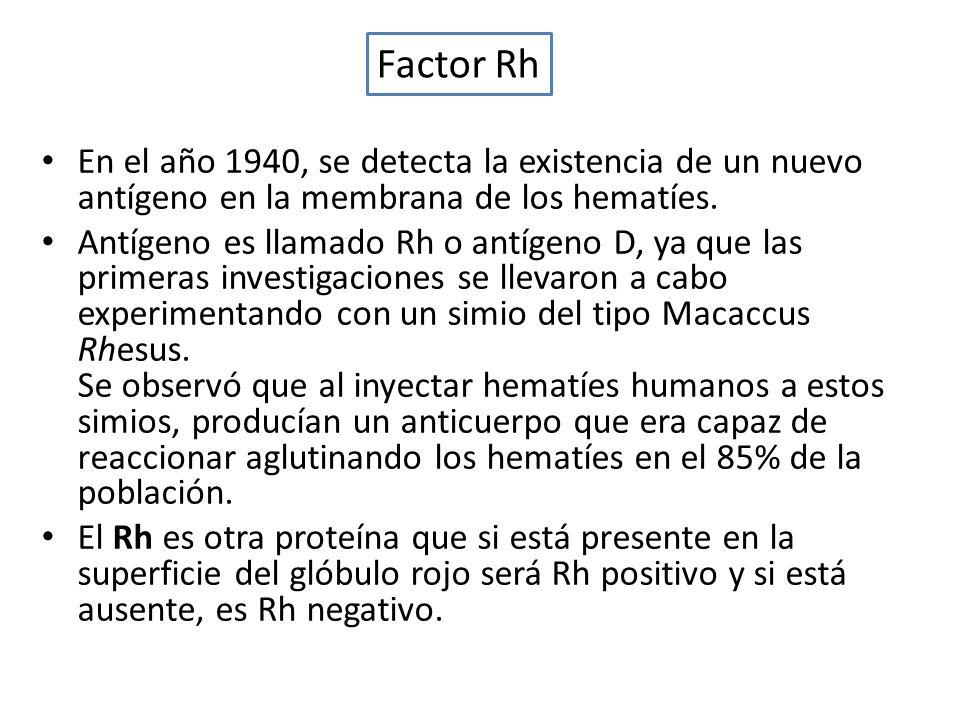 Factor Rh En el año 1940, se detecta la existencia de un nuevo antígeno en la membrana de los hematíes.