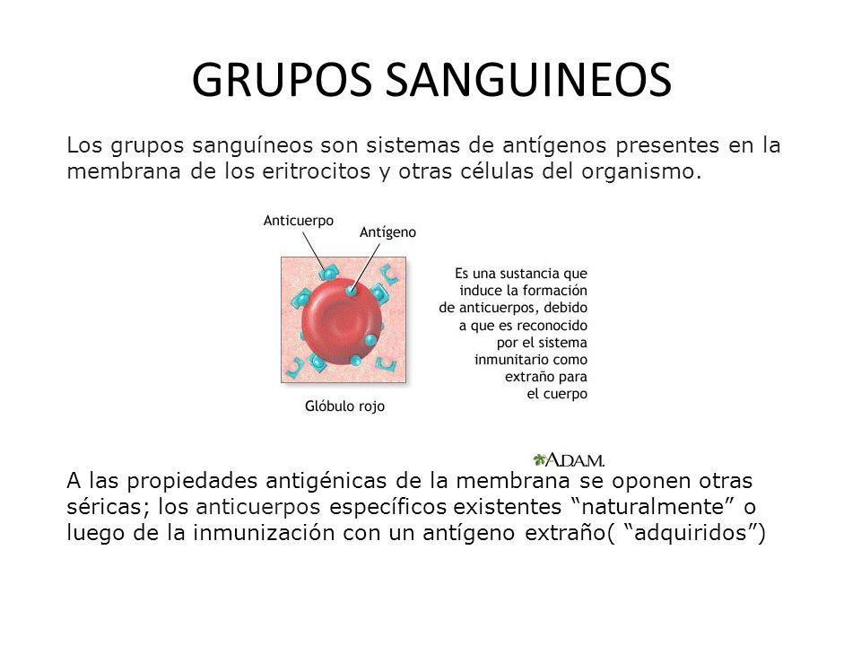 GRUPOS SANGUINEOS Los grupos sanguíneos son sistemas de antígenos presentes en la membrana de los eritrocitos y otras células del organismo.