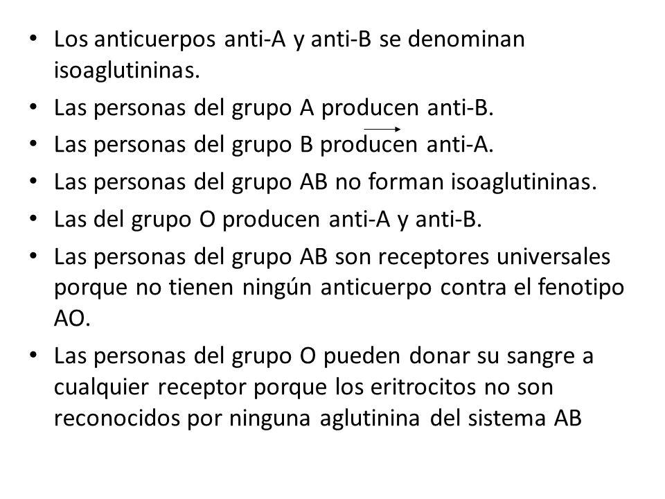 Los anticuerpos anti-A y anti-B se denominan isoaglutininas.