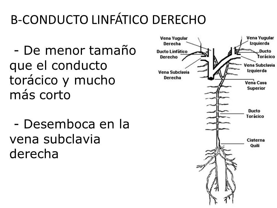 B-CONDUCTO LINFÁTICO DERECHO