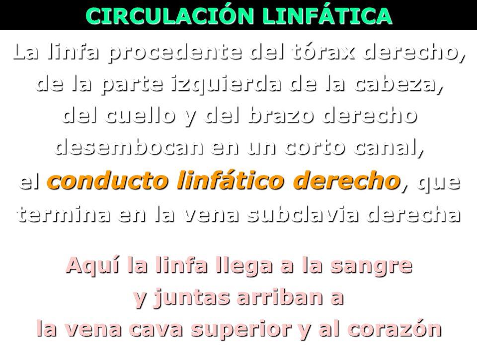 CIRCULACIÓN LINFÁTICA