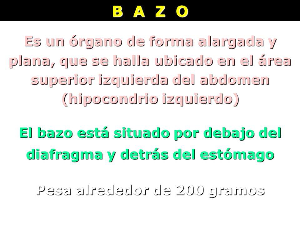 B A Z O Es un órgano de forma alargada y plana, que se halla ubicado en el área superior izquierda del abdomen (hipocondrio izquierdo)
