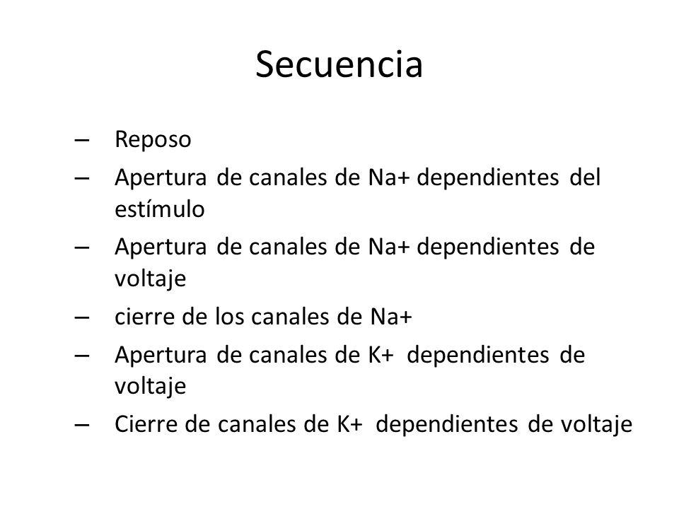 Secuencia Reposo Apertura de canales de Na+ dependientes del estímulo