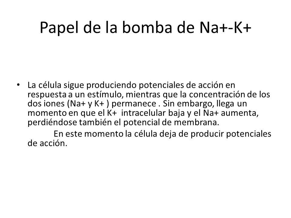 Papel de la bomba de Na+-K+