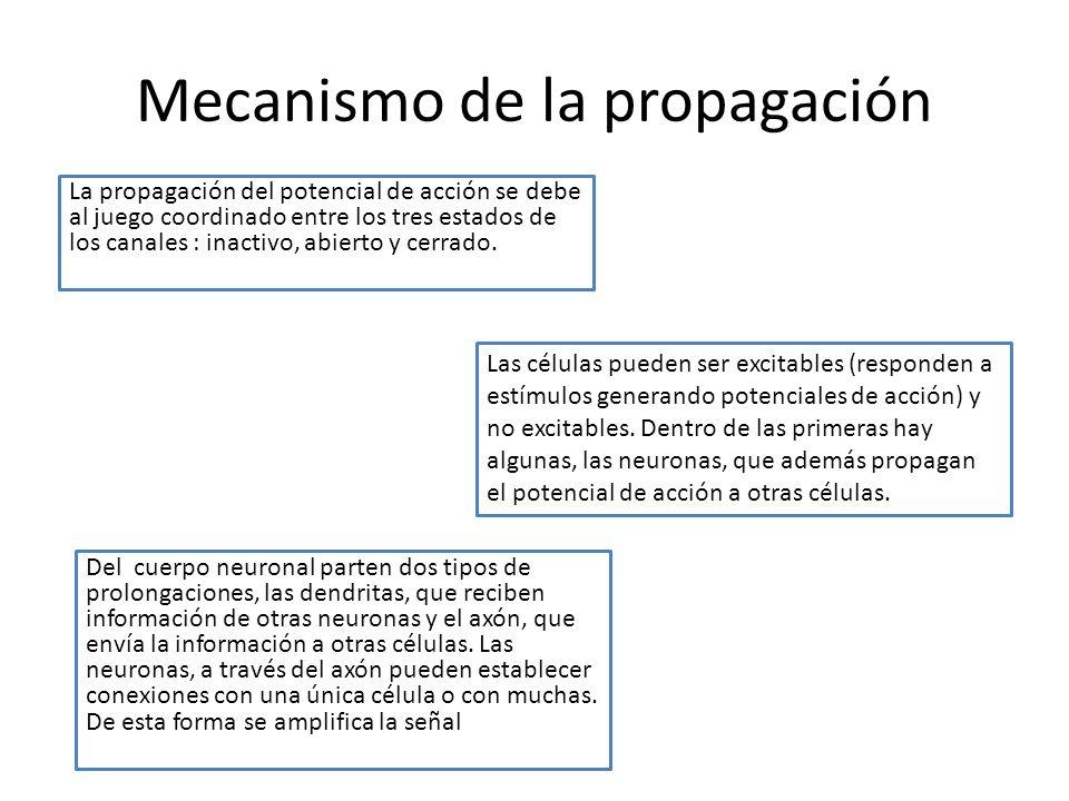 Mecanismo de la propagación