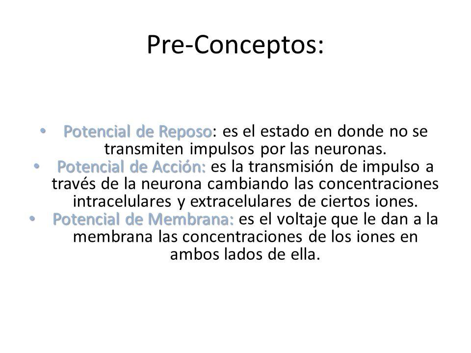Pre-Conceptos: Potencial de Reposo: es el estado en donde no se transmiten impulsos por las neuronas.