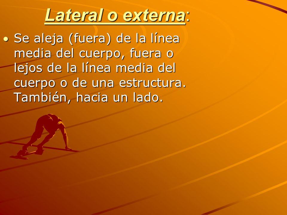 Lateral o externa: