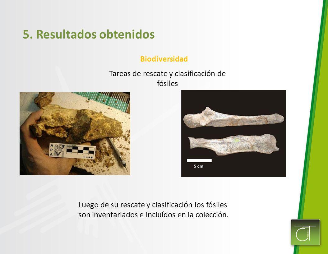 Tareas de rescate y clasificación de fósiles