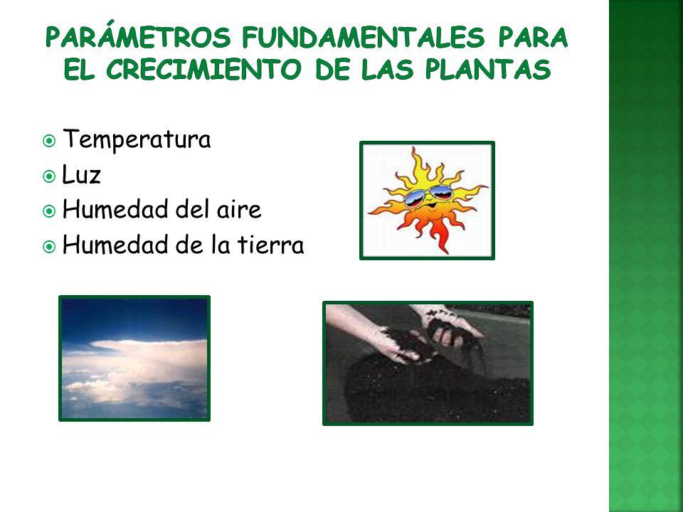 Guadalupe mendoza d graciela gavia g ppt video online for Plantas fundamentales