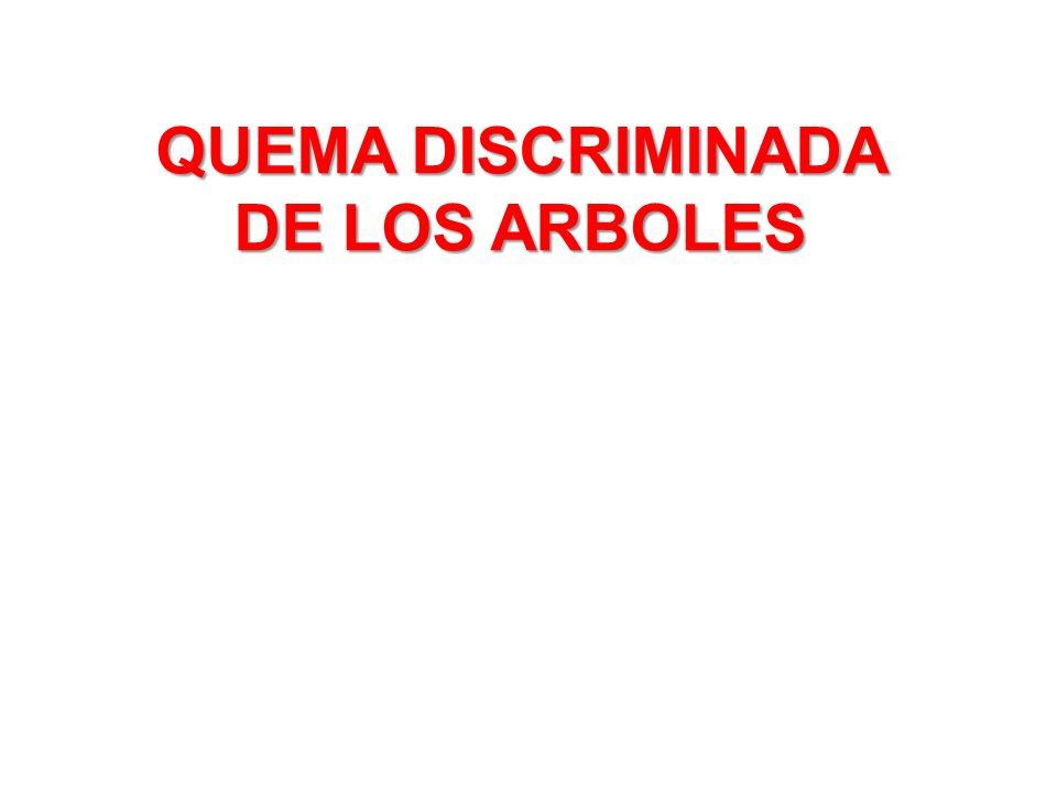 QUEMA DISCRIMINADA DE LOS ARBOLES