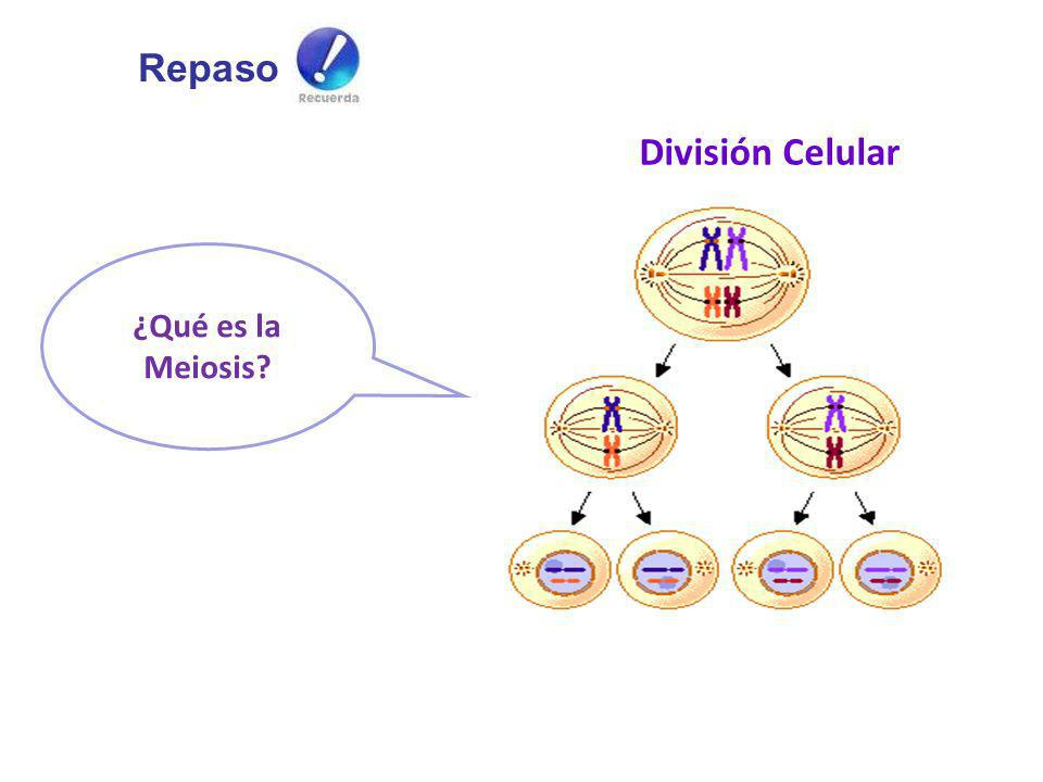 Repaso División Celular ¿Qué es la Meiosis