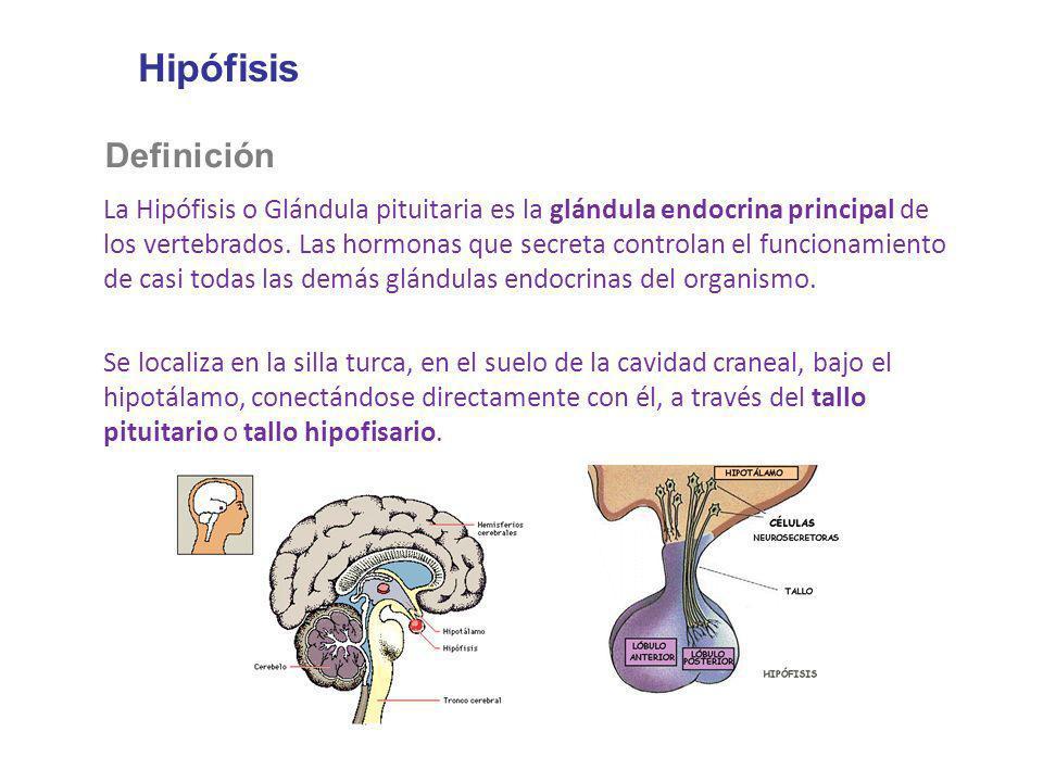 HipófisisDefinición.