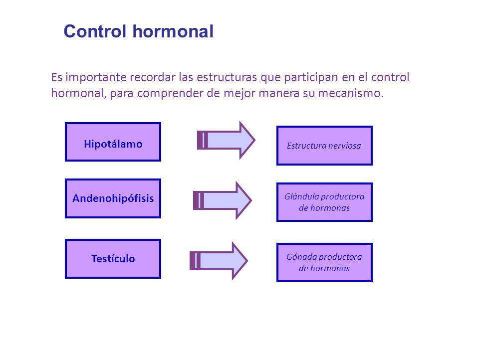 Control hormonalEs importante recordar las estructuras que participan en el control hormonal, para comprender de mejor manera su mecanismo.