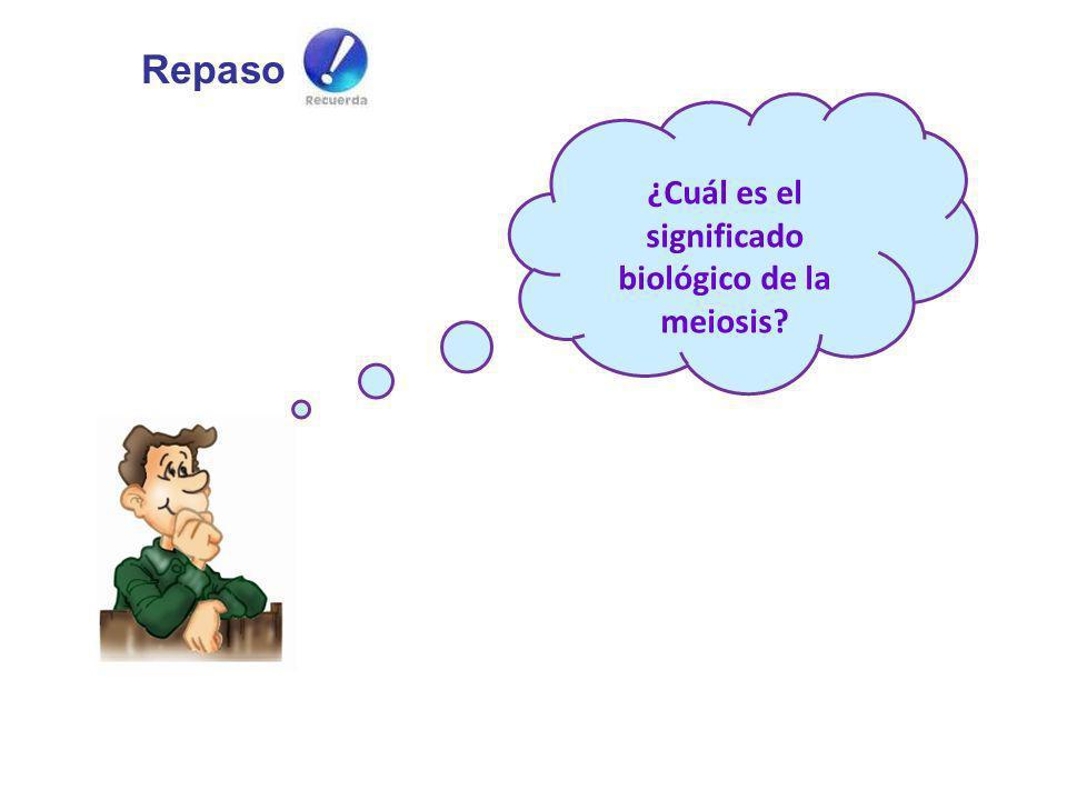 ¿Cuál es el significado biológico de la meiosis