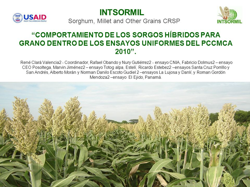 INTSORMILSorghum, Millet and Other Grains CRSP.