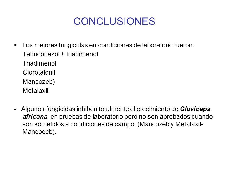 CONCLUSIONES Los mejores fungicidas en condiciones de laboratorio fueron: Tebuconazol + triadimenol.