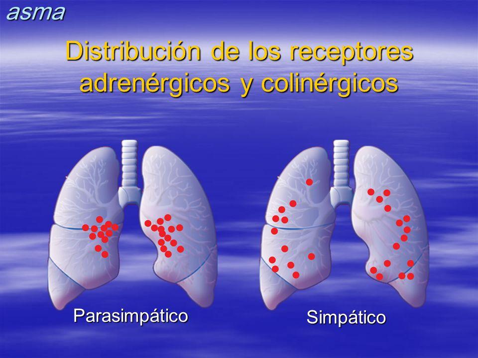 Distribución de los receptores adrenérgicos y colinérgicos