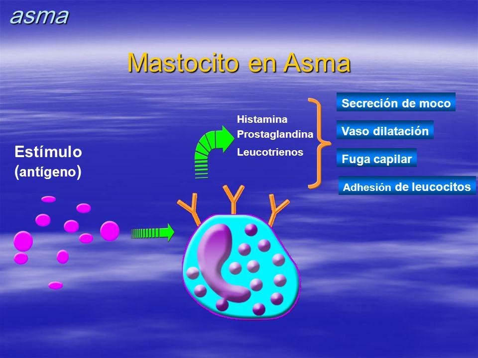 Mastocito en Asma asma Estímulo (antígeno) Secreción de moco