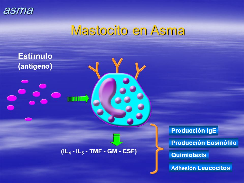 Mastocito en Asma asma Estímulo (antígeno) Producción IgE