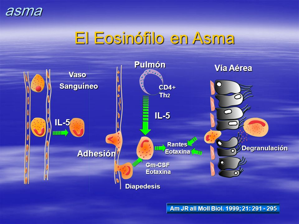 El Eosinófilo en Asma asma Pulmón Vía Aérea IL-5 IL-5 Adhesión Vaso