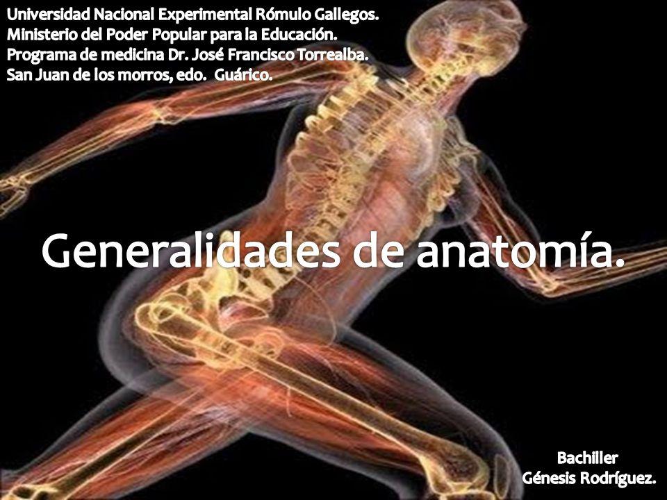 Generalidades de anatomía.