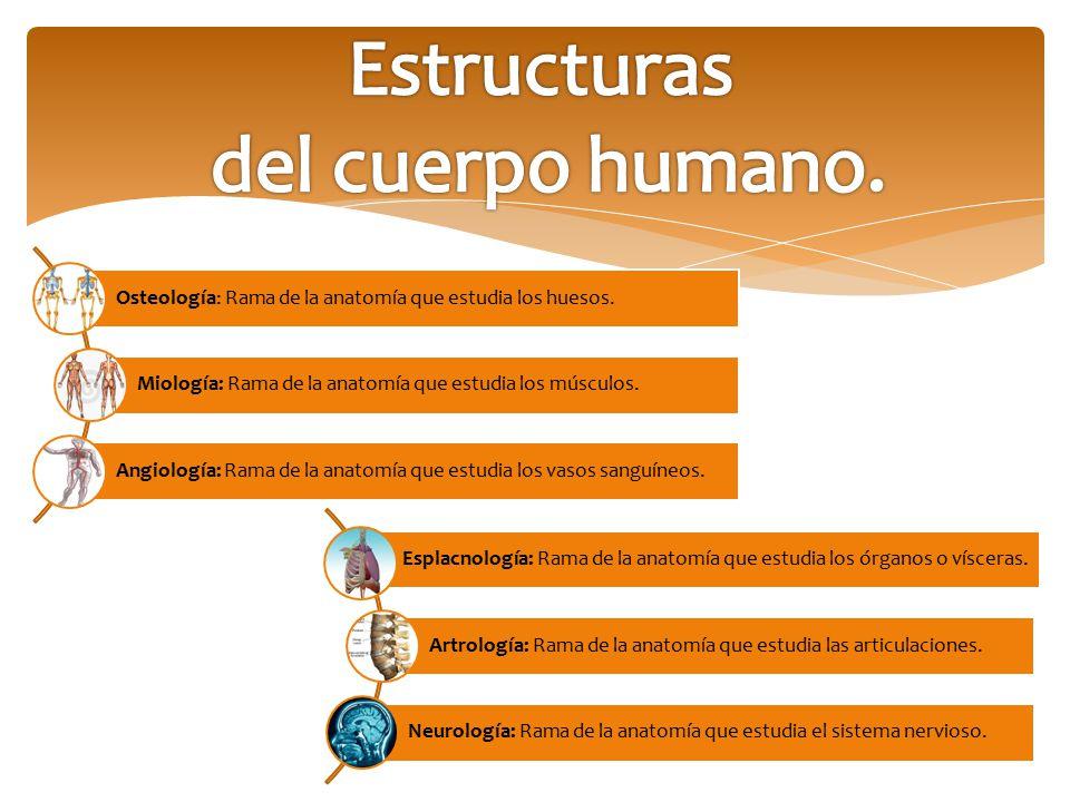 Estructuras del cuerpo humano.