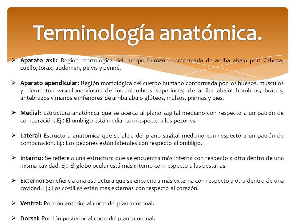 Terminología anatómica.