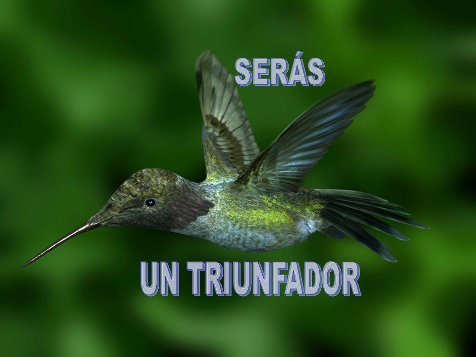 SERÁS UN TRIUNFADOR