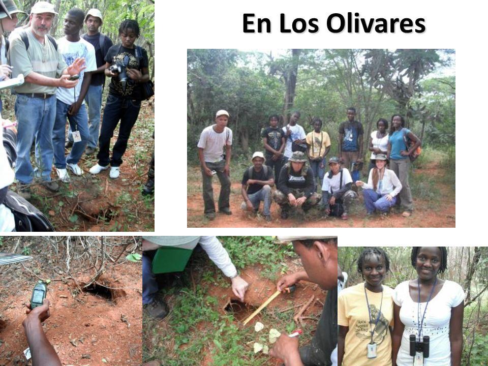 En Los Olivares