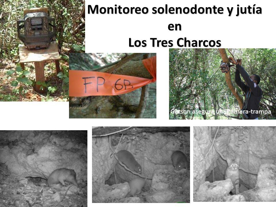 Monitoreo solenodonte y jutía en Los Tres Charcos