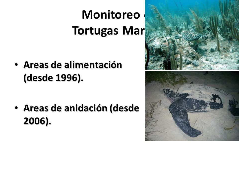 Monitoreo de Tortugas Marinas