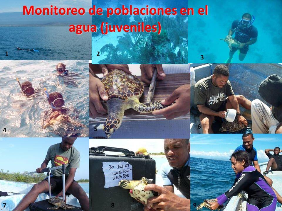 Monitoreo de poblaciones en el agua (juveniles)