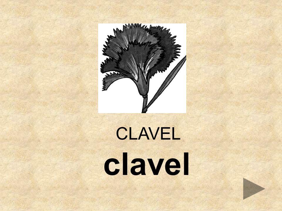 CLAVEL clavel