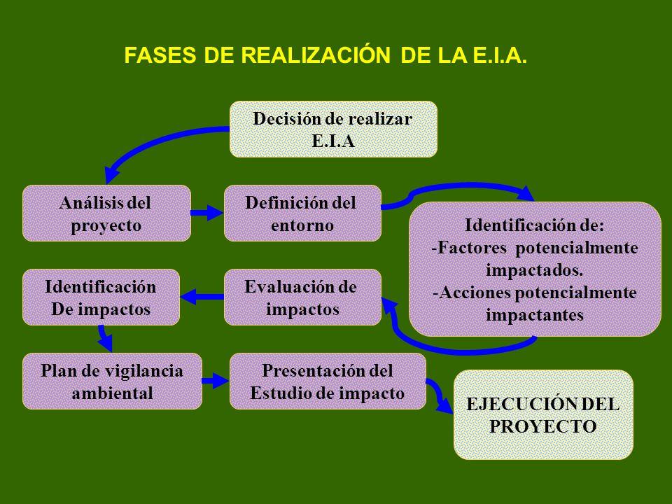 FASES DE REALIZACIÓN DE LA E.I.A.