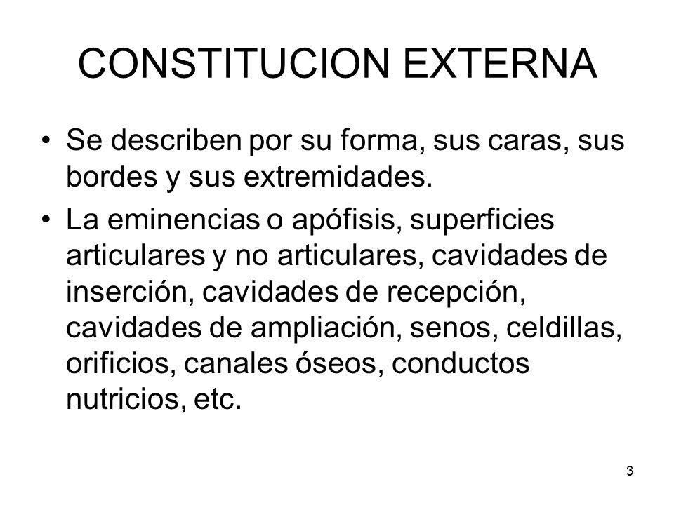 CONSTITUCION EXTERNASe describen por su forma, sus caras, sus bordes y sus extremidades.