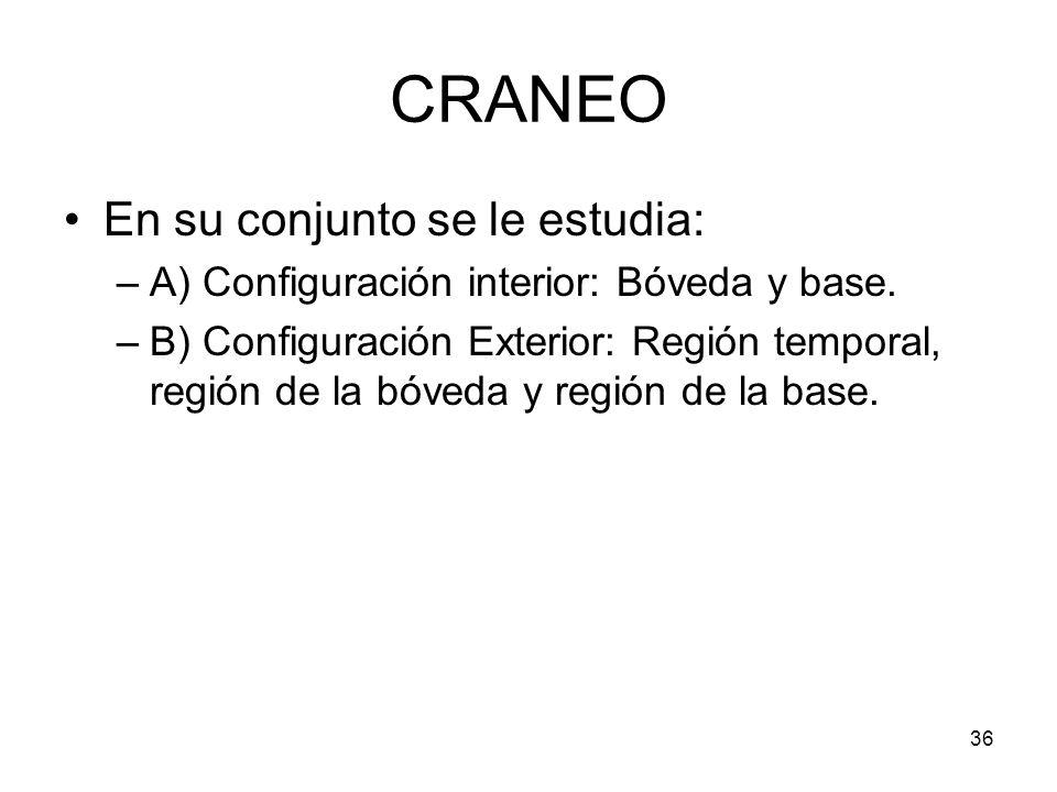CRANEO En su conjunto se le estudia: