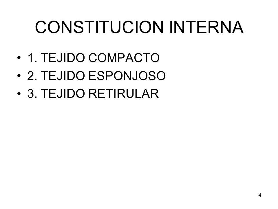 CONSTITUCION INTERNA 1. TEJIDO COMPACTO 2. TEJIDO ESPONJOSO