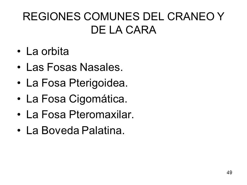 REGIONES COMUNES DEL CRANEO Y DE LA CARA