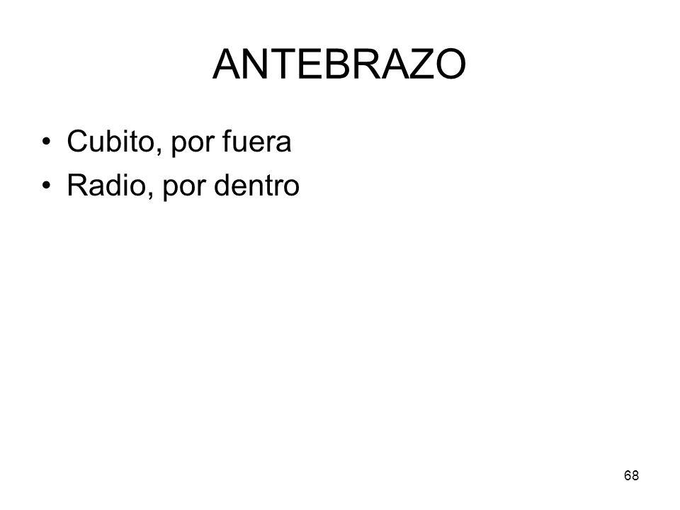 ANTEBRAZO Cubito, por fuera Radio, por dentro