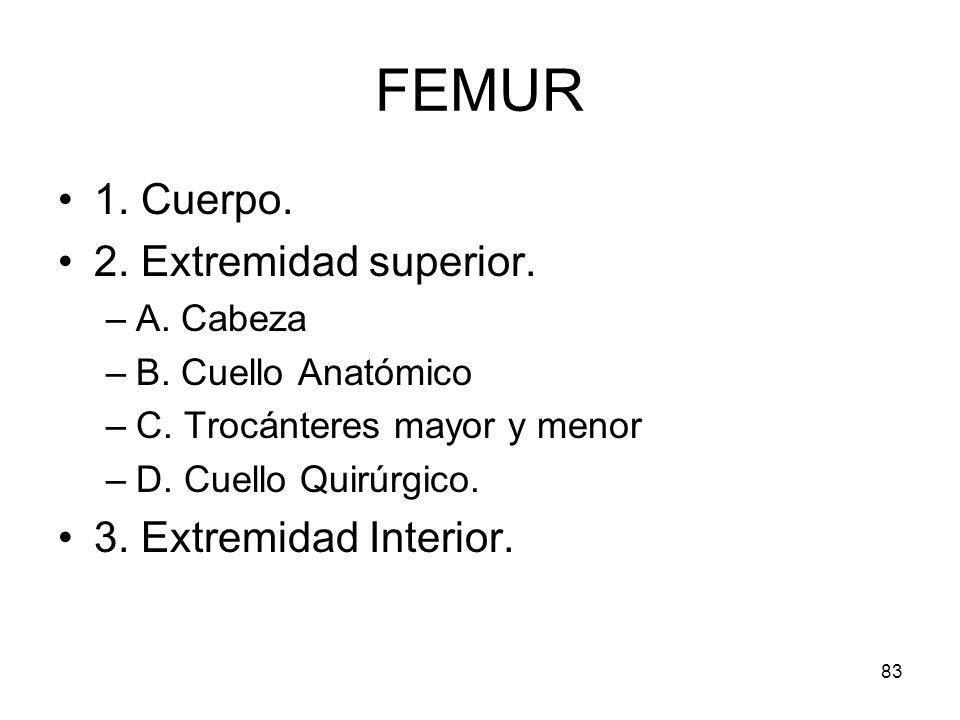 FEMUR 1. Cuerpo. 2. Extremidad superior. 3. Extremidad Interior.