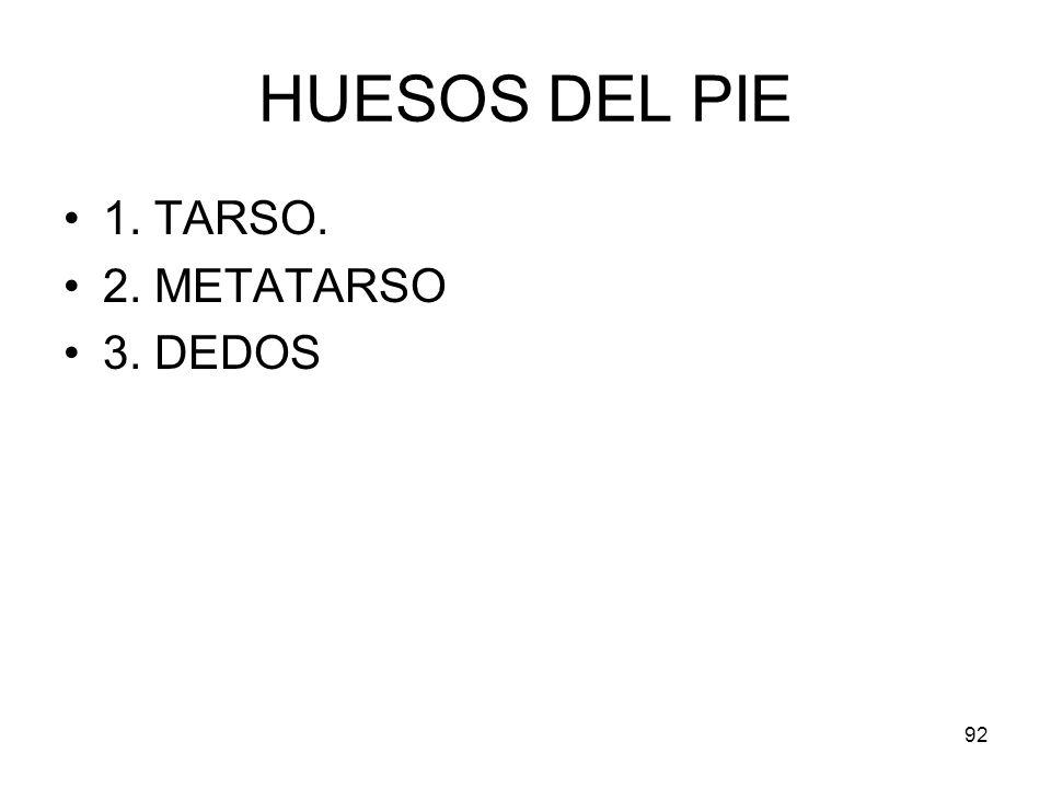 HUESOS DEL PIE 1. TARSO. 2. METATARSO 3. DEDOS