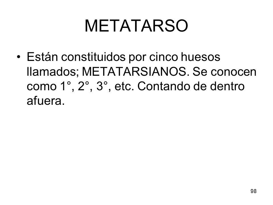 METATARSO Están constituidos por cinco huesos llamados; METATARSIANOS.
