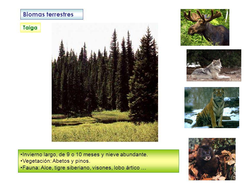 Biomas terrestres Taiga