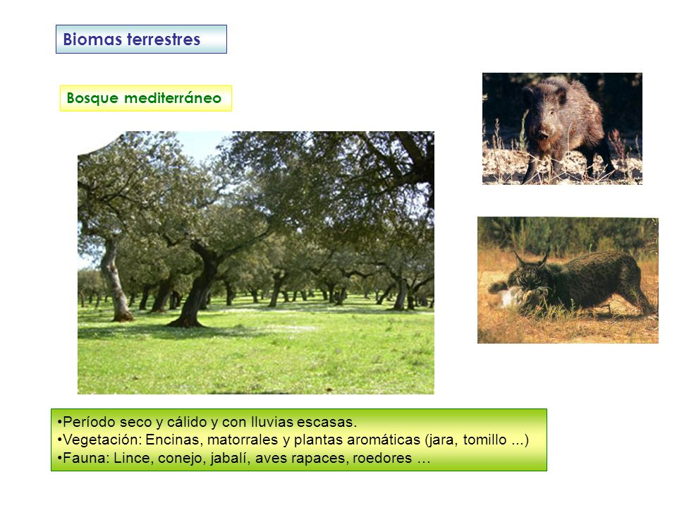 Biomas terrestres Bosque mediterráneo