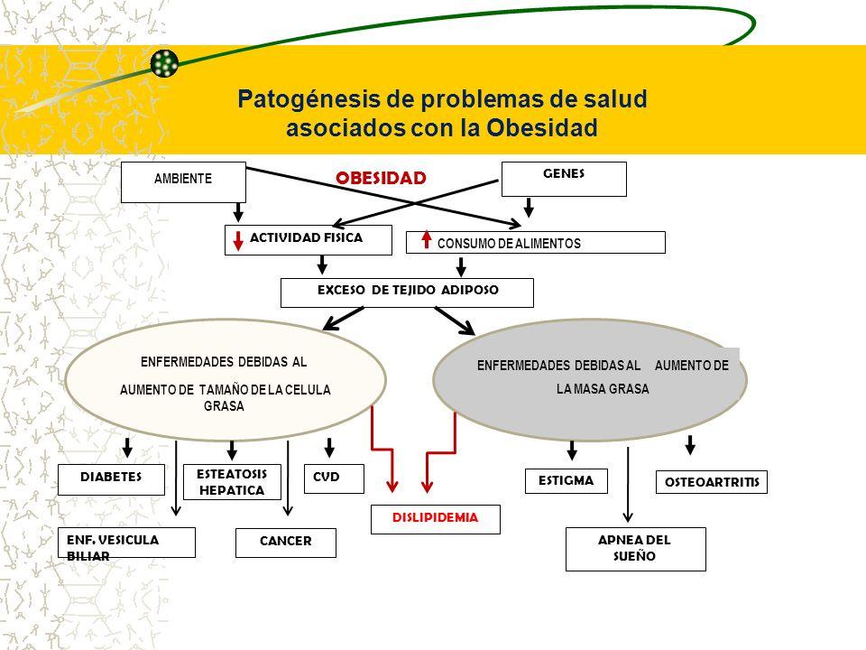 Patogénesis de problemas de salud asociados con la Obesidad