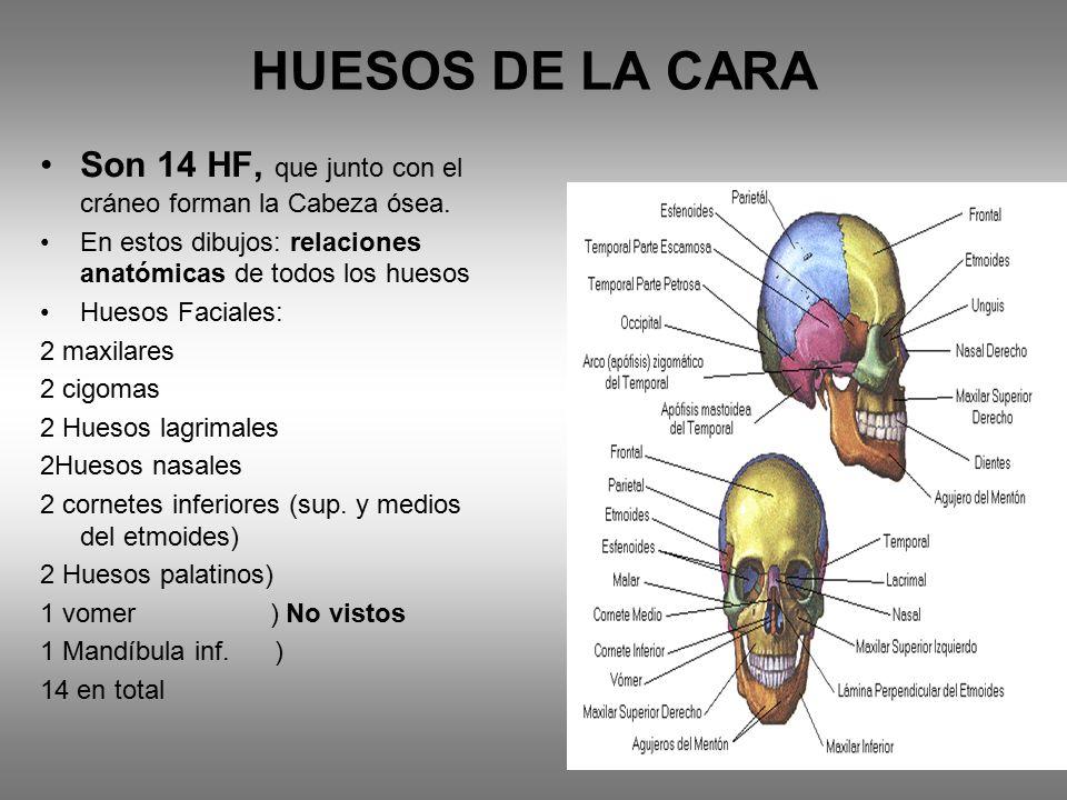 TECNOLOGIA DE LAS IMGENES I  ppt video online descargar