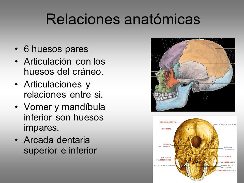 Fantástico Anatomía De Los Huesos Del Cráneo Friso - Imágenes de ...